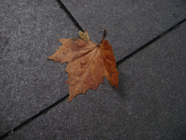 Mohabbatein Leaf